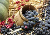 Grapes Wine Harvest Autumn Read